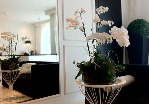 Современный стиль любит минимализм, в который подойдут цветы с белыми лепестками