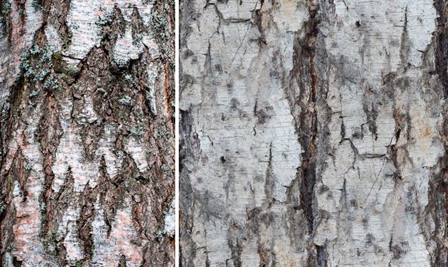 Обои под дерево для стен – фото