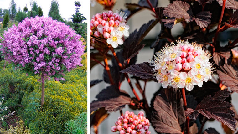 Какие цветы подойдут для маленькой клумбы?