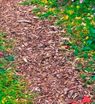 дорожки на участке из коры деревьев