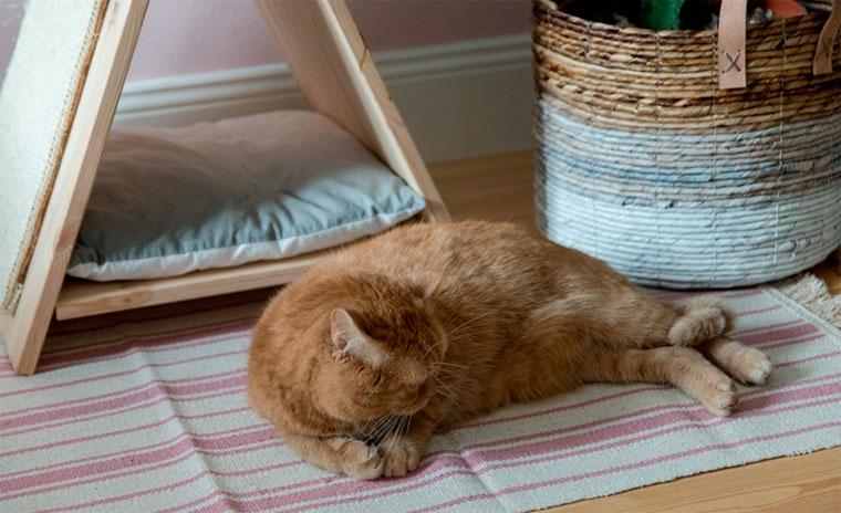 Домик когтеточка для кошек своими руками – фото