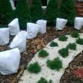 укрывка растений на зиму