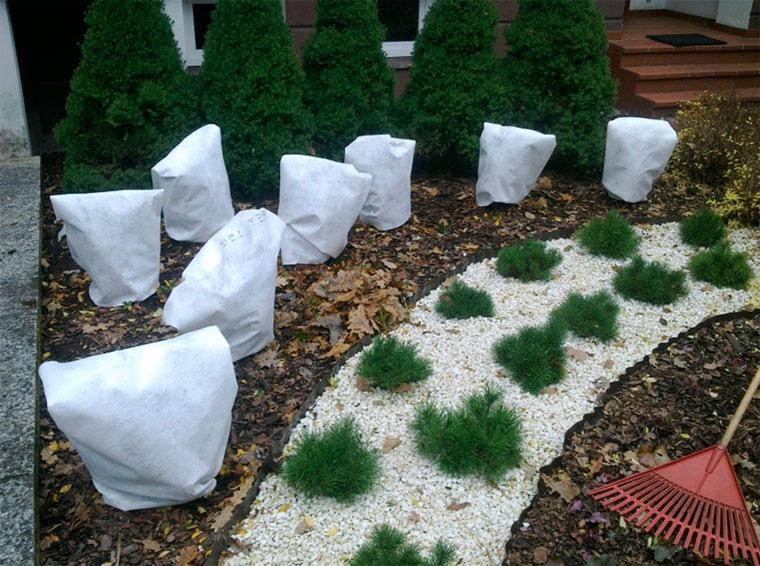 Как укрывать растения на зиму?