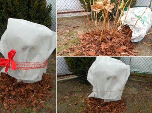 Как укрыть куст на зиму агроволокном и сосновой корой