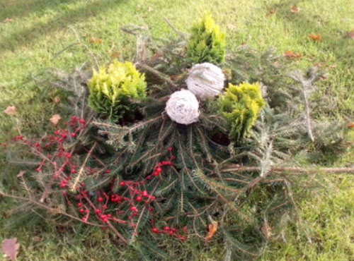 Чем лучше укрыть растения на зиму