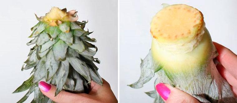 Как правильно укоренить ананас