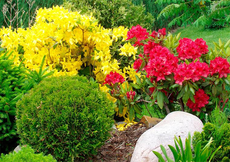 Цветники и клумбы, композиции из различных растений
