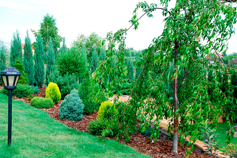 Закладываем газон, клумбы, огород