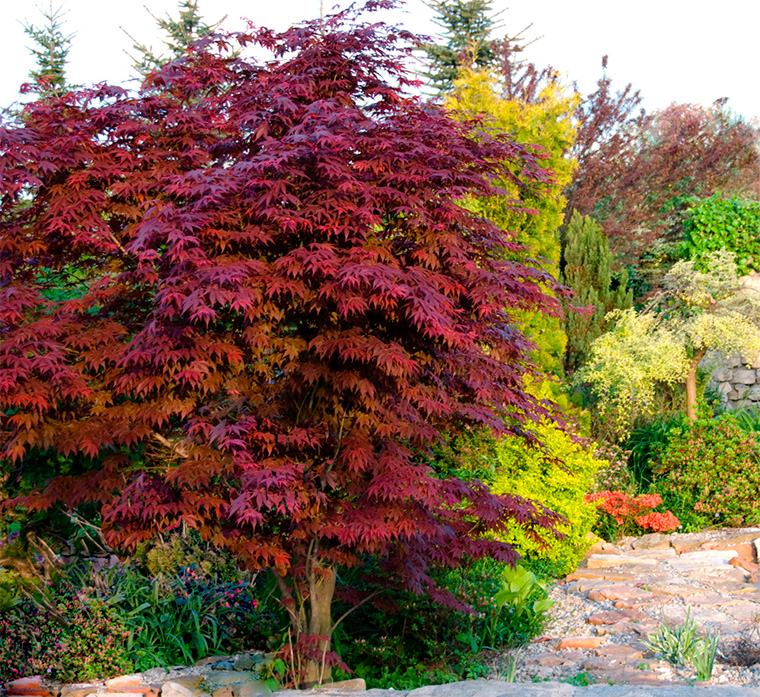 Деревья и кустарники в ландшафтном дизайне