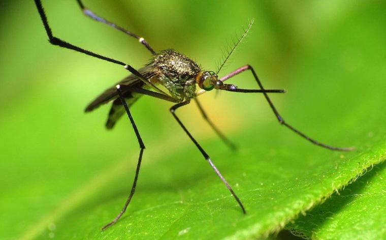 Средство от комаров на даче
