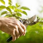 Как выбрать секатор садовый?