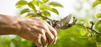 Какой секатор лучше выбрать для сада, для обрезки деревьев, видео и отзывы