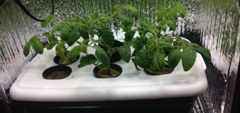 Выращивание в гроубоксе – фильтры, освещение, температура и влажность