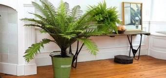 Домашние растения очищающие воздух в квартире