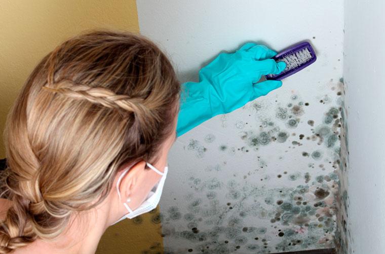 Чем убрать плесень со стен в квартире